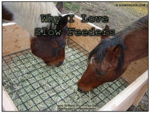 Happy Horse Healthy Planet.Slow_Feeders_Blog