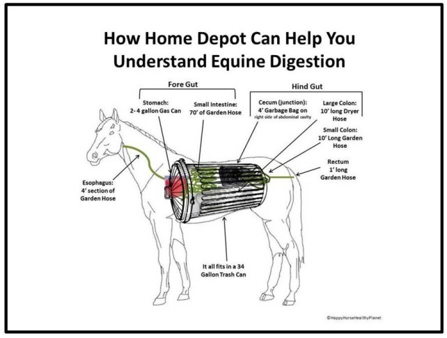 HappyHorseHealthyPlanet_Horse Digestive Tract