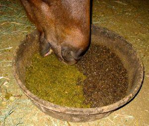 horseandman