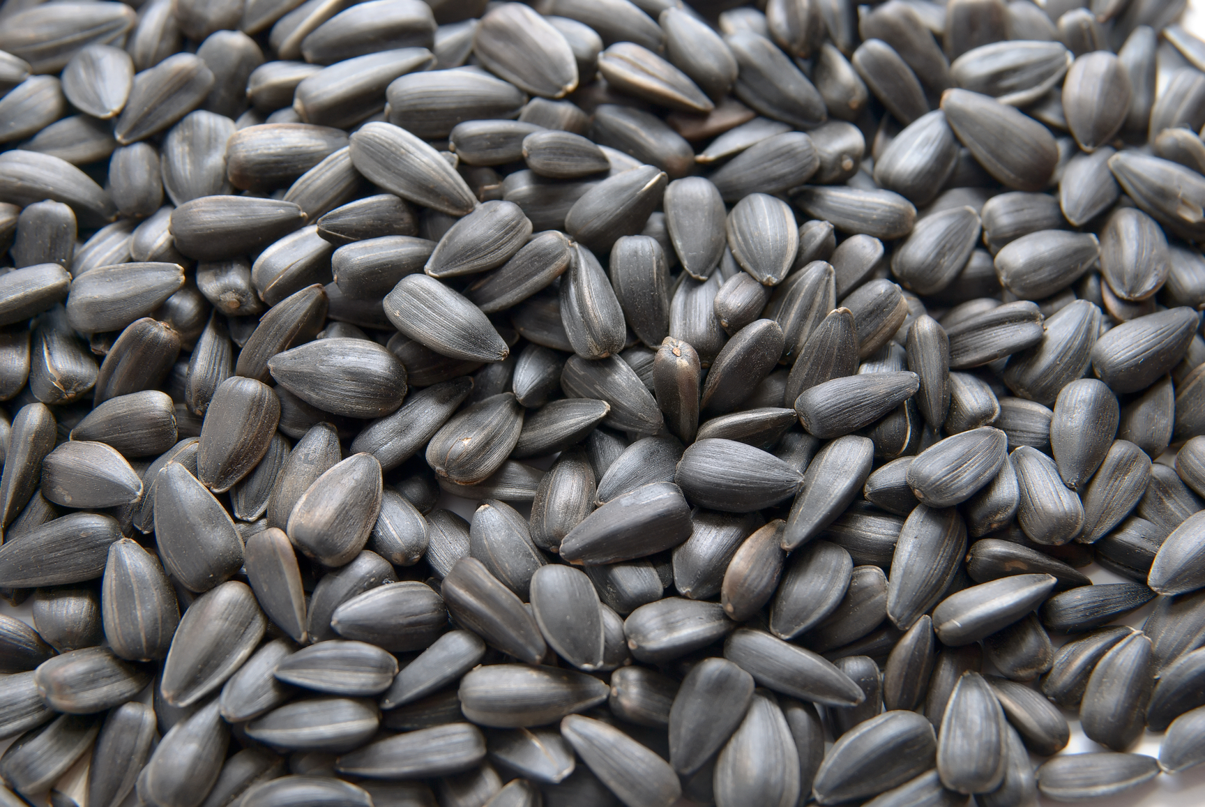 black oil sunflower seeds black sunflower seeds for horses the equine 29163