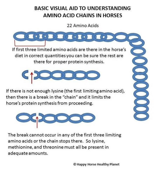 Happy Horse Healthy Planet.com._Amino Acid Chains2