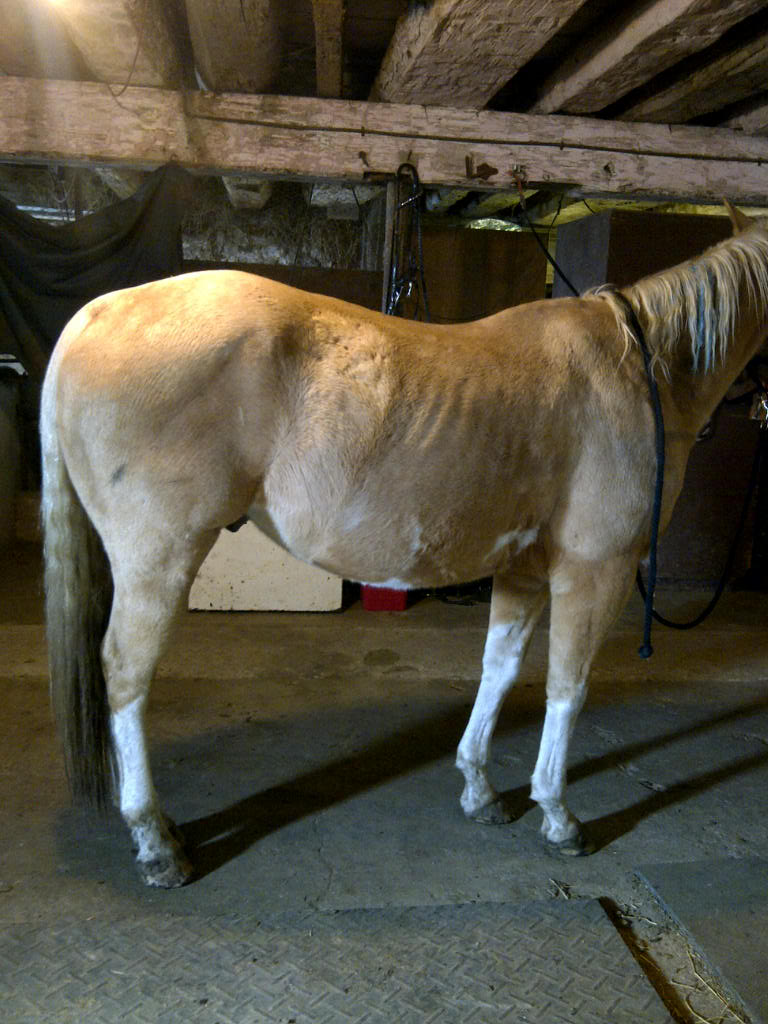Chinese Herbs For Horses | The Equine Nutrition Nerd