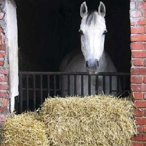 Horse_Hay