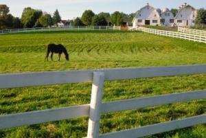 Horse_in_pasture_web