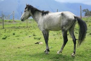Happy Horse Healthy Planet _BCS3