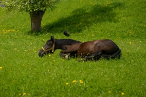 Happy Horse Healthy Planet _colic 3