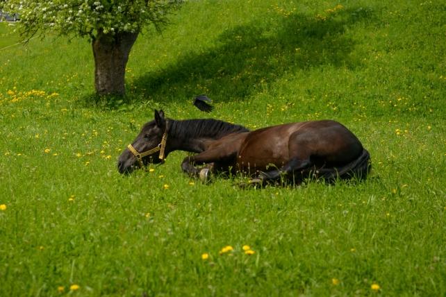 Happy Horse Healthy Planet _colic 3