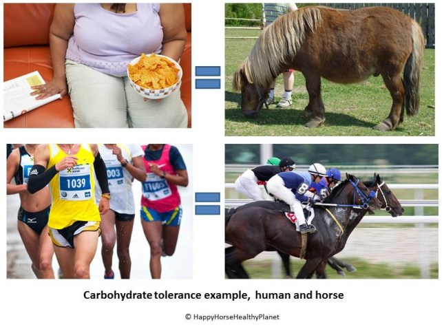 HappyHorseHealthyPlanet.Carb Tolerance
