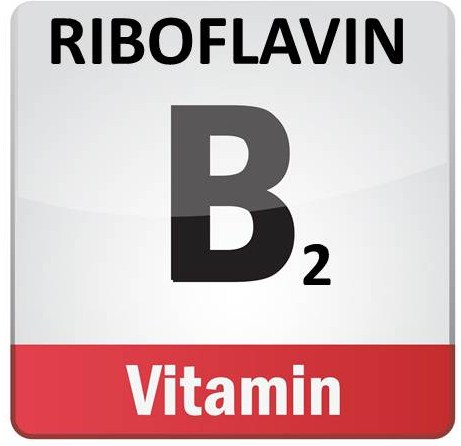 b2 riboflavin in the equine diet | the equine nutrition nerd, Skeleton