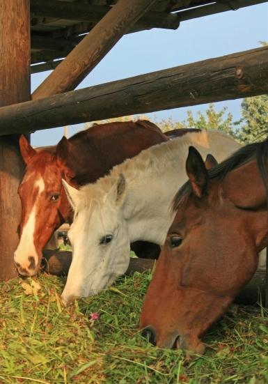 HappyHorseHealthyPlanet_Horses Hay