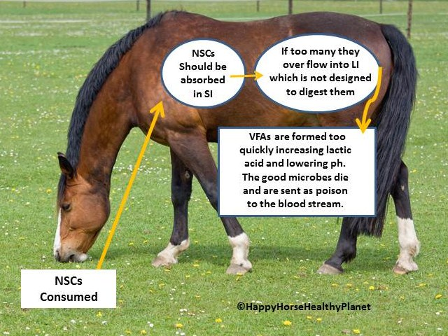 HappyHorseHealthyPlanet_NSC_Two