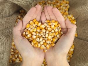 heart corn