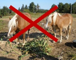 Happy Horse Healthy Planet_Draft_Corn