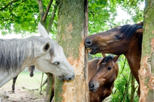 HappyHorseHealthyPlanet_WoodChewing