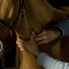 HappyHorseHealthyPlanet_Blood Test