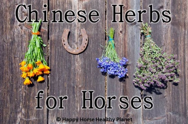 Happy Horse Heathy Planet_Herbs for Horses