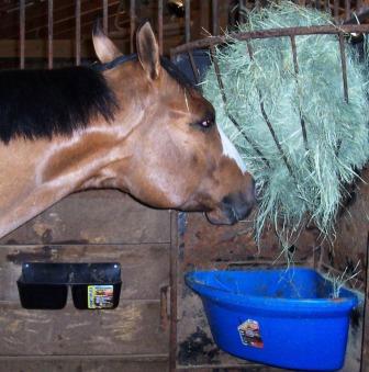 Equine Nutrition Nerd_extension
