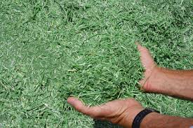 chopped hay1