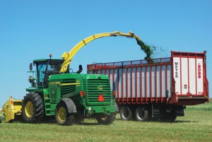 Chopping-alfalfa-0459-2Fh