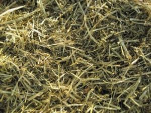 Triple-Crown-Nutrition-Alfalfa-Forage-Image