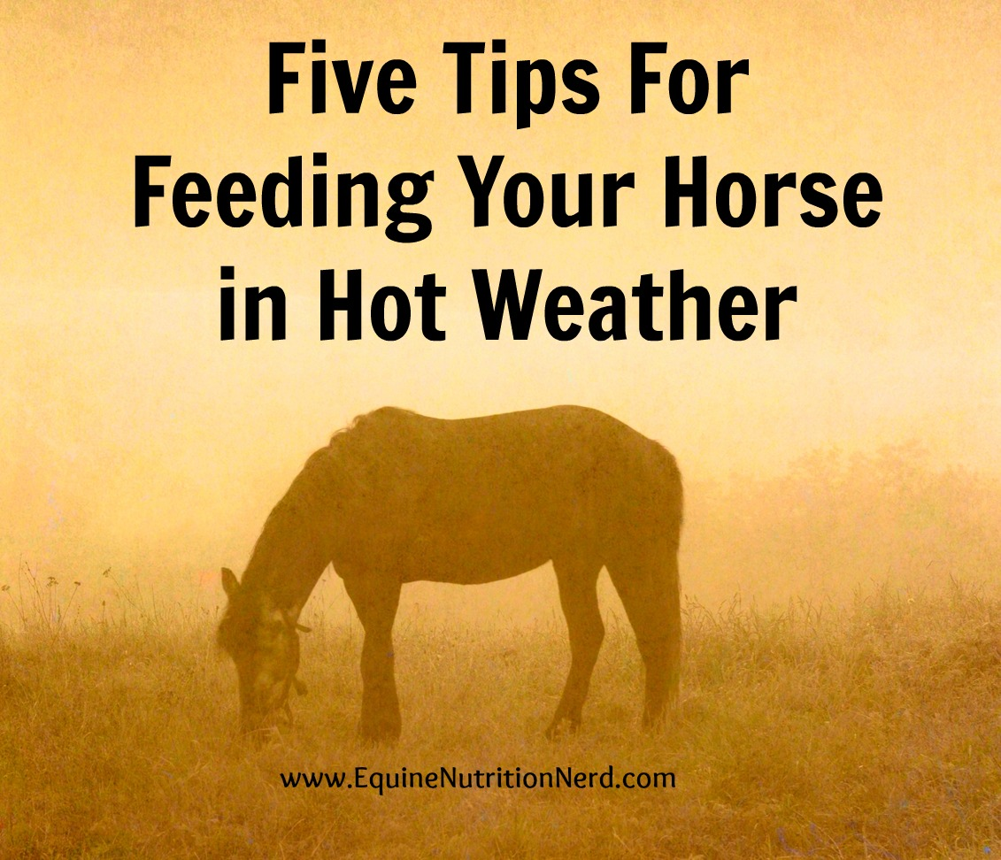The complications of colic in horses essay
