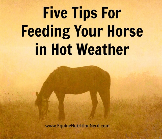 Five Tips for Feeding Your Horse in Hot Weather Cover