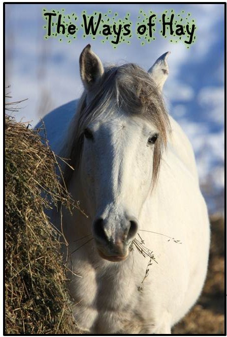 happy-horse-healthy-planet-ways-of-hay